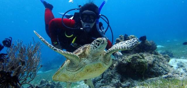 """El viaje se desarrollara del 3 al 17 de febrero de 2015 y esta organizado por el Centro de buceo """"Piratas Alona Dive Center"""", dirigido por y para españoles, con […]"""