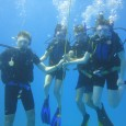 If you want to dive in Javea, you can contact our dive Centre «Buceo Pelicar». We have a large experience in Dive in Javea and Filipines. We speak english and […]